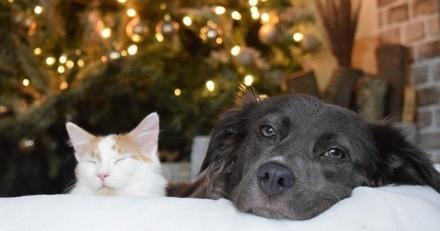 A Noël, les animaux de compagnie vont être gâtés !