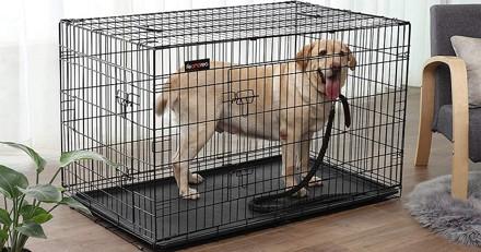 Quelle est la meilleure cage pour chien en 2021 ?