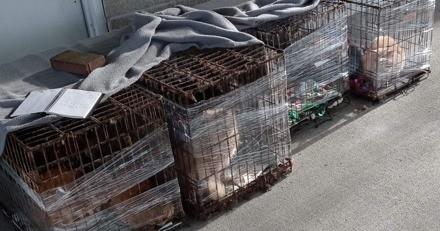 4 cages abandonnées devant le refuge : il se fige de terreur en comptant les chats entassés à l'intérieur