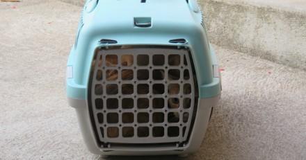 Il trouve une cage de transport à côté des poubelles : en l'ouvrant, c'est la stupeur