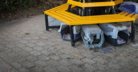 Boite abandonnée devant le refuge : en l'ouvrant, ils trouvent des chats mais ce n'est pas tout…
