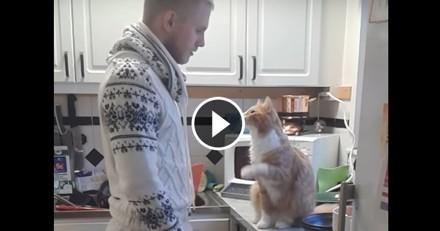 Le rituel quotidien de ce chat câlin avec son maître va vous faire fondre ! (Vidéo du jour)
