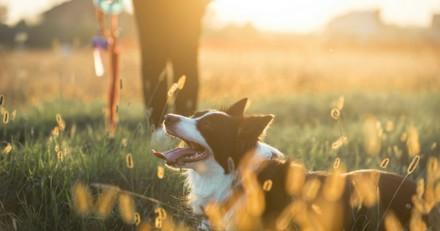 5 raisons d'emmener votre chien citadin à la campagne
