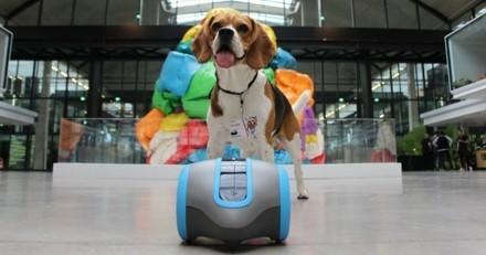 Laïka, le premier compagnon de vie de votre chien !