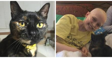 Atteinte d'un cancer, cette petite fille mourante fait le vœu de câliner un chat, mais elle avait un autre plan