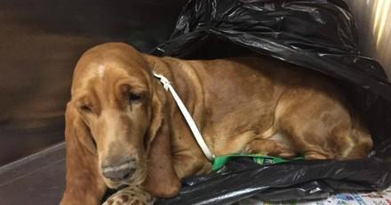 Il met son chien dans un sac poubelle, l'emmène dans un refuge et fait une demande à peine croyable