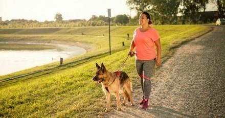 6 bonnes raisons de pratiquer la cani-marche avec son chien !