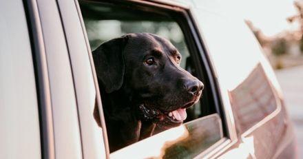 Le policier s'approche d'une voiture qui tourne en rond : quand il regarde par la fenêtre, il croit halluciner !