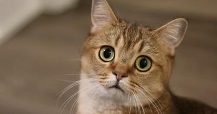 Votre stress peut stresser votre chat