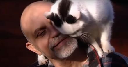 A 70 ans, cet homme a déjà sauvé des centaines de chats et il ne compte pas s'arrêter là (Vidéo)