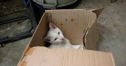 A l'école, en Inde, on apprend à asphyxier les chatons