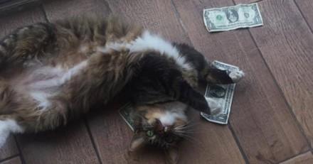 Ce chat récolte de l'argent pour les sans-abris de façon très originale (Vidéo)