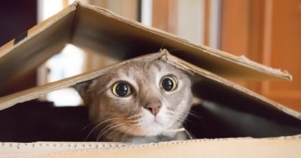 Envoyé par erreur dans un colis, ce chat a pu retrouver sa famille !
