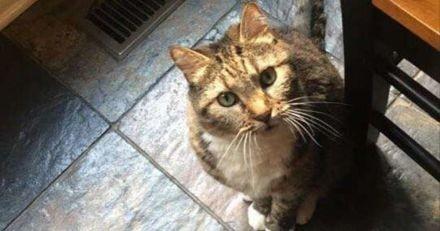 Ce chat fait bien sentir à ses humains qu'il n'aime pas les voir autant pendant le confinement (Vidéo)