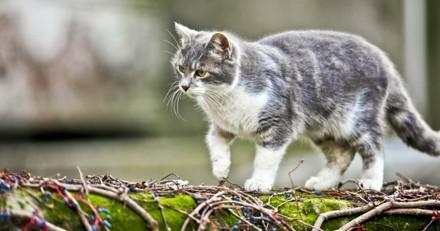 Son chat disparaît aux Pays-Bas, elle le retrouve… en Autriche !