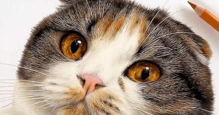 Photos ou dessins ? Avec des crayons de couleur, un artiste créé des portraits de chats super réalistes !