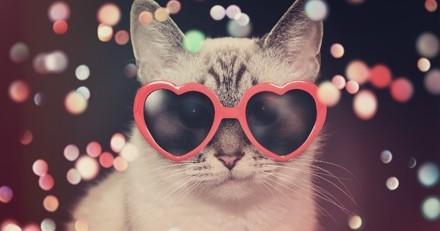 Un festival pour les amoureux des chats va être organisé à Londres en 2018