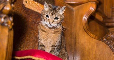Après le décès du chat d'une cathédrale, 7000 personnes assistent à une messe en son honneur