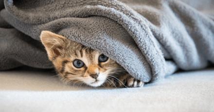 Mon nouveau chaton se cache : comment l'aider à prendre confiance ?