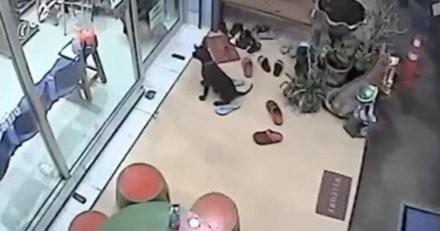 Le vétérinaire voit un chien attendre devant son cabinet : quand il comprend pourquoi, il reste bouche bée