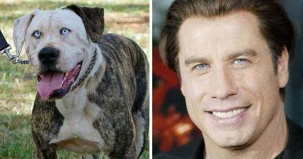 Ces 11 chiens ressemblent comme deux gouttes d'eau à des stars d'Hollywood !