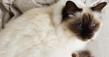 Camille Cerf présente son magnifique chat sur son compte Instagram