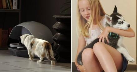 CES 2017 : les meilleurs objets connectés français pour votre animal de compagnie !