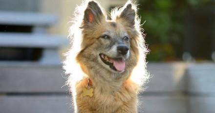 Chance, la chienne de Dave et Patrick Loiseau, est décédée