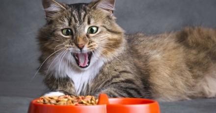 Comment changer l'alimentation de mon chat ?