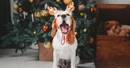 Pour terminer l'année 2020 en beauté… la première chanson de Noël pour chien a été créée !