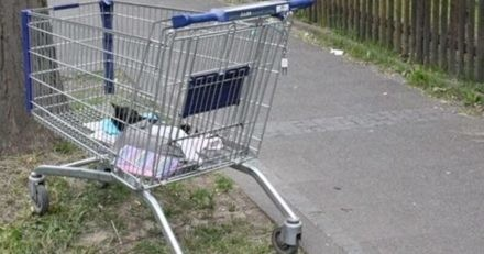 Vêtements de bébé dans un caddie : les policiers soulèvent quelque chose et ont un haut-le-cœur