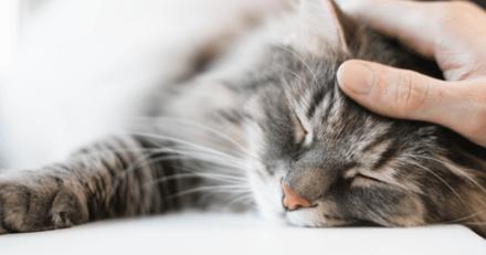 Selon une étude, un chat n'est pas rassuré par les objets qui sentent comme son propriétaire