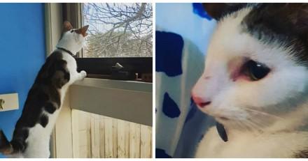 Né avec 4 oreilles, ce chaton a eu la chance de rencontrer son frère qui est exactement comme lui