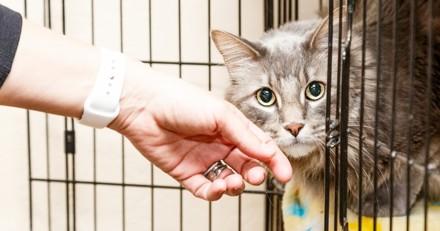 Ce site de rencontre vous permet de trouver votre chat idéal !