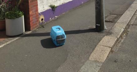 Abandonné dans la rue avec ses affaires, ce chat a eu la chance de croiser une personne au grand cœur