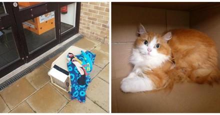 Elle trouve un chat abandonné, 3 jours plus tard elle comprend qu'on lui a raconté un énorme mensonge