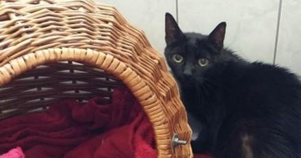 Il dépose son chat de 15 ans dans un refuge. Quand les volontaires comprennent la vérité ils sont furieux.