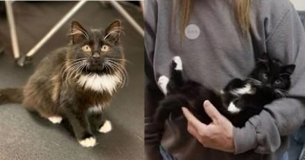 Le chat se dirige vers un homme : dans le refuge, tout le monde retient sa respiration