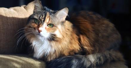 Arthrose du chat : Comment prévenir l'apparition de la maladie ?