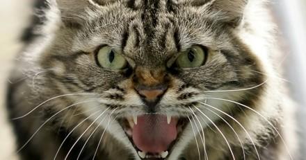 Pourquoi mon chat est-il agressif ?