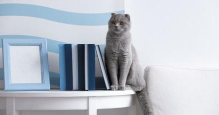 Anxiété de séparation chez le chat : quels sont les signes et les traitements ?