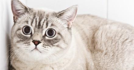 6 choses qui rendent votre chat anxieux (et pas qu'un peu)