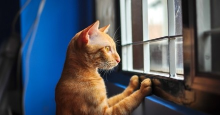 4 choses à savoir avant d'accueillir un chat d'appartement