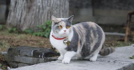 Il achète un traceur GPS pour localiser son chat et hallucine quand il voit d'où vient le signal
