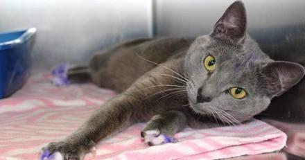 Si vous croisez un chat avec les pattes violettes : attention, il court un grave danger !
