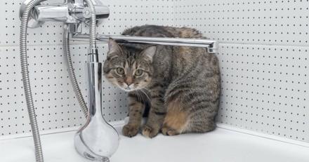 Après des travaux dans sa salle de bain, elle entend sa baignoire miauler…
