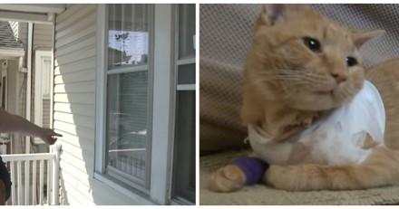 Paniquée par des coups de feu, elle se précipite et n'en revient pas de ce que son chat a fait (Vidéo)