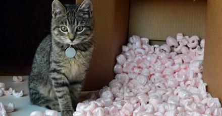 Votre chat griffe une comportementaliste r pond vos - Comment empecher un chat de gratter a la porte ...