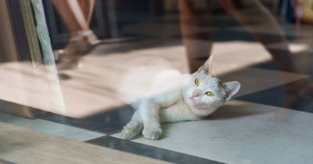 Ce chat est complètement captivé par ce qu'il voit dans la vitrine d'un magasin (Vidéo)