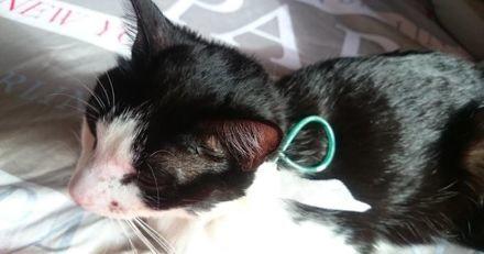 Elle trouve son chat en sang : quand elle comprend pourquoi, elle se rend à la gendarmerie en urgence